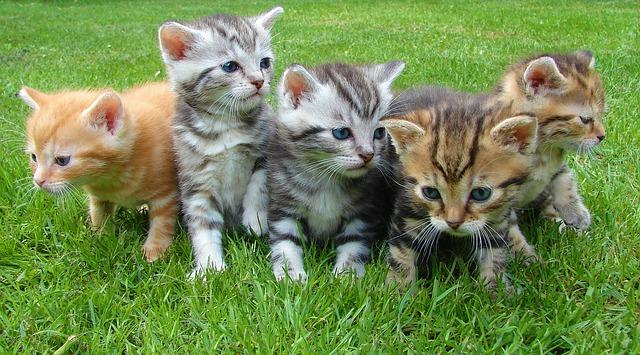 Katzenblog24-Bild