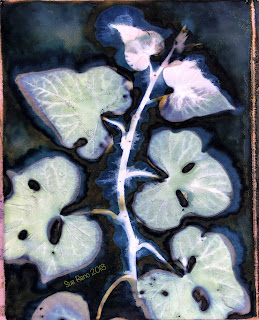 Wet cyanotype -Sue Reno_Image 507