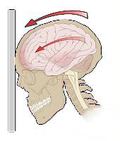 10% of our brain myth