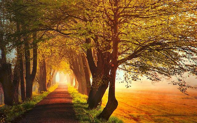 Bomen met herfstbladeren langs de kant van de weg tijdens zonsopgang