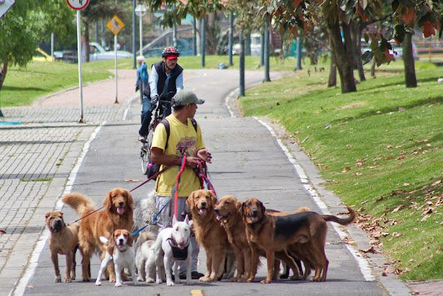 Bogotá paseadores de perros