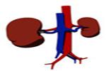 Concepto de riñón