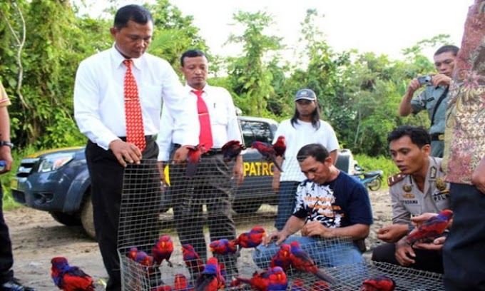 Polres Cilegon Gagalkan Upaya Penyelundupan 1000 Ekor Burung Langka