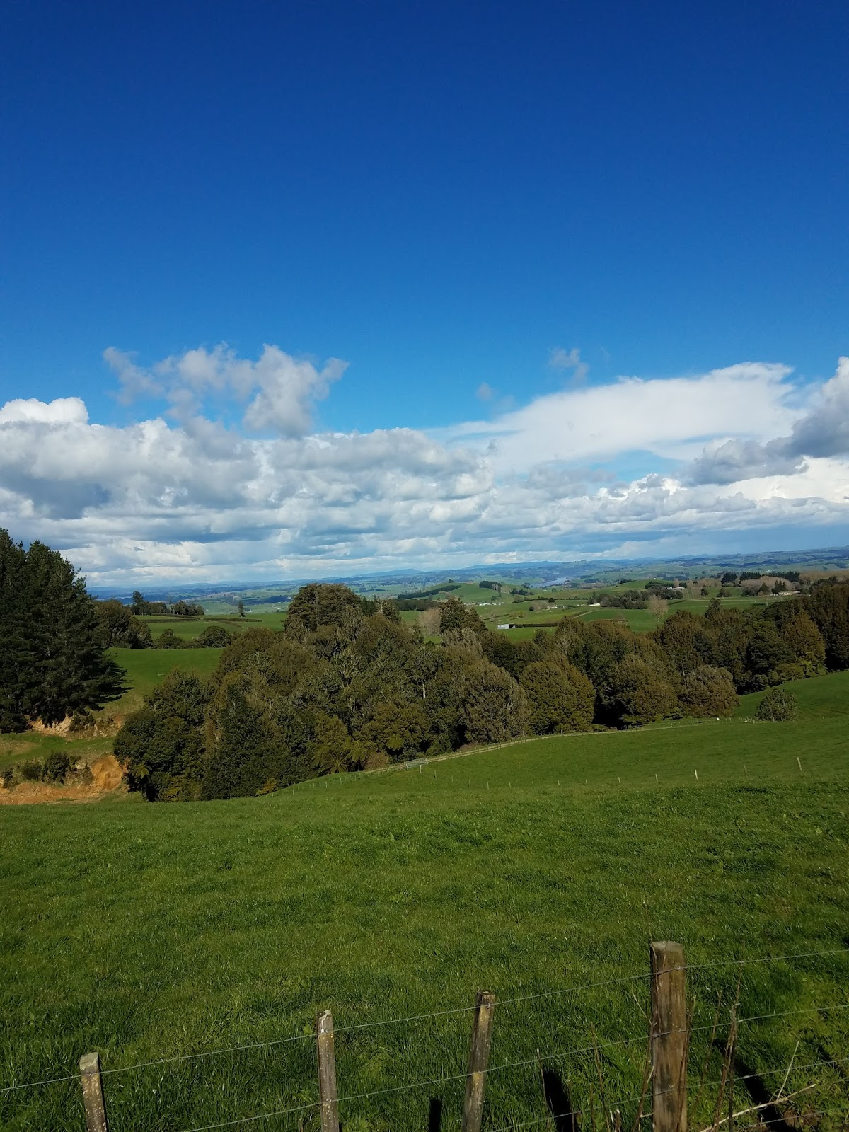 how to go to rotorua from auckland