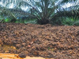 manfaat-solid-kelapa-sawit.jpg