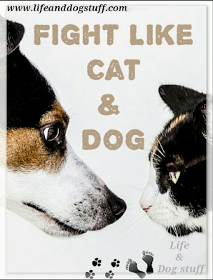 Fight Like Cat and Dog