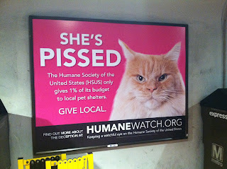 Humane Watch ad calling out HSUS for only donating 1% of funds to animal shelters
