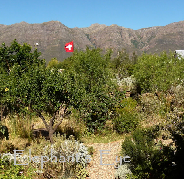 Olifantskop (elephant's head) from Paradise and Roses with the Swiss flag flying