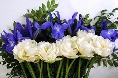 White mountain French tulip