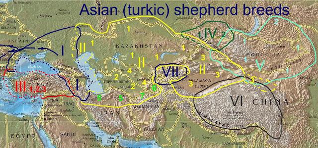 Тюркские овчарки в Азии