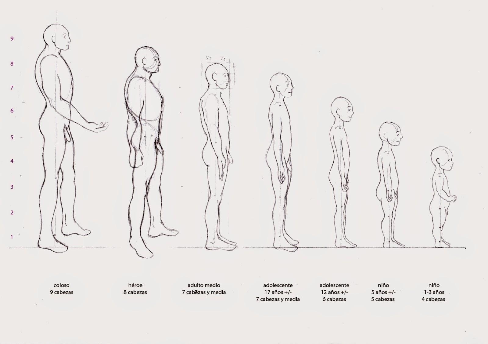 No Soy Una Cebolla: Anatomía. Frentes Y Perfiles Humanos