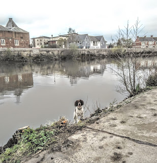 Happy dog on the riverbank, Exeter