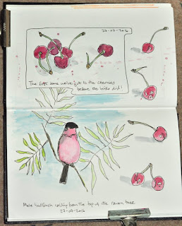 Ink and watercolour sketching cherries and bullfinch
