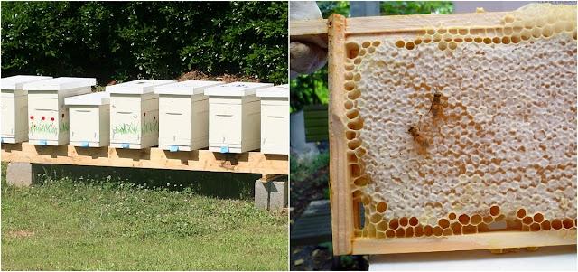 Συμφέρει να πουλάω μέλι η παραφυάδες