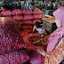 Bawang Merah Brebes | 0877-7751-5088 | Jual Bawang Merah Brebes | Penjual Bawang Merah di Brebes