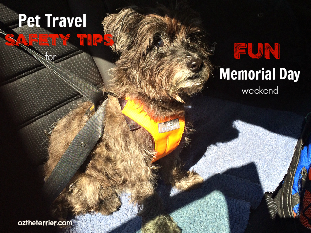 Pet Travel Safety for Memorial Day holiday weekend