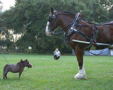 The smallest horse in the world ever - photo#47