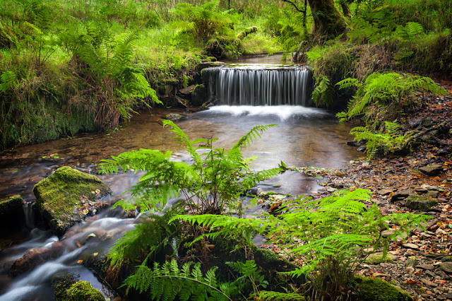 Beautiful cascade of of water in this vibrant woodland scene in Exmoor