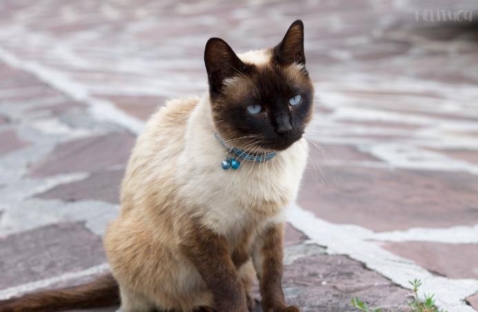 navarra rural fotografía gato