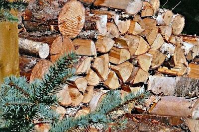 Πότε κόβουμε ξύλα