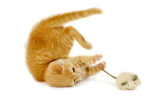 How do you get cats to play with their toys? The first step is to think like a cat!
