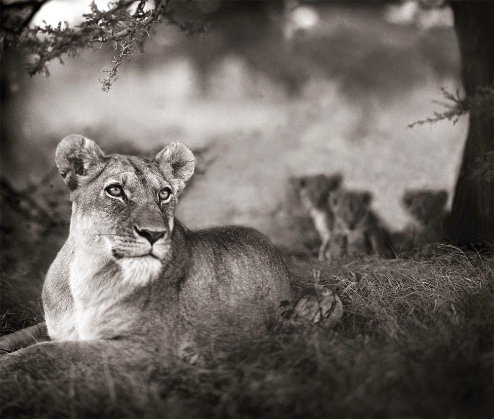 Nick Brandt, On this Earth