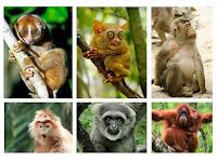 Daftar Primata Indonesia TERBARU