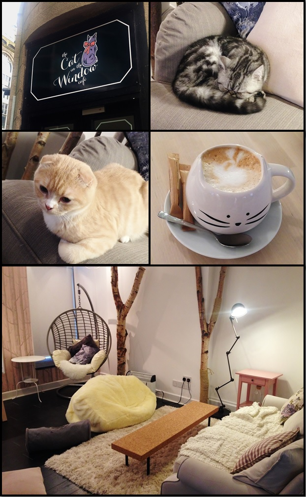 Cat cafe Aberdeen