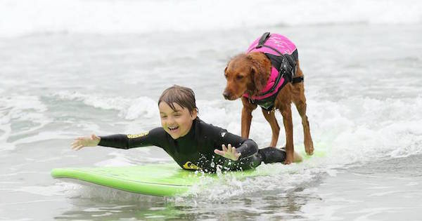 niño en tabla de surf ayudado por perra raza golden retriever