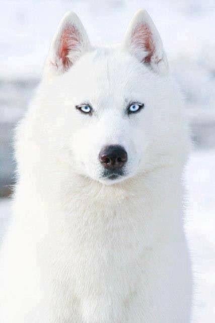 i want a white