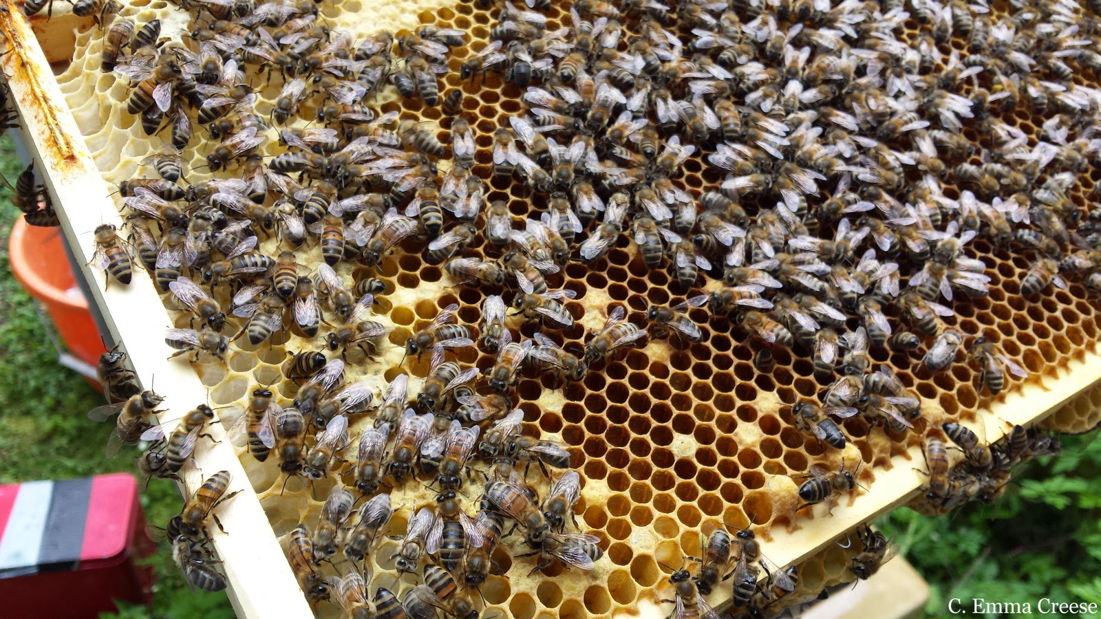 Q & A with Los Angeles Beekeeper, Staci Valentine