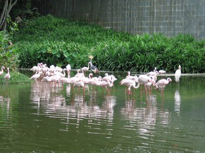 Jurong Bird Park in Singapore