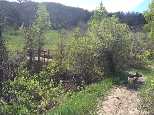 Hiking Icebox Canyon, Wheeler Creek trail, Hiking in Utah with Dogs