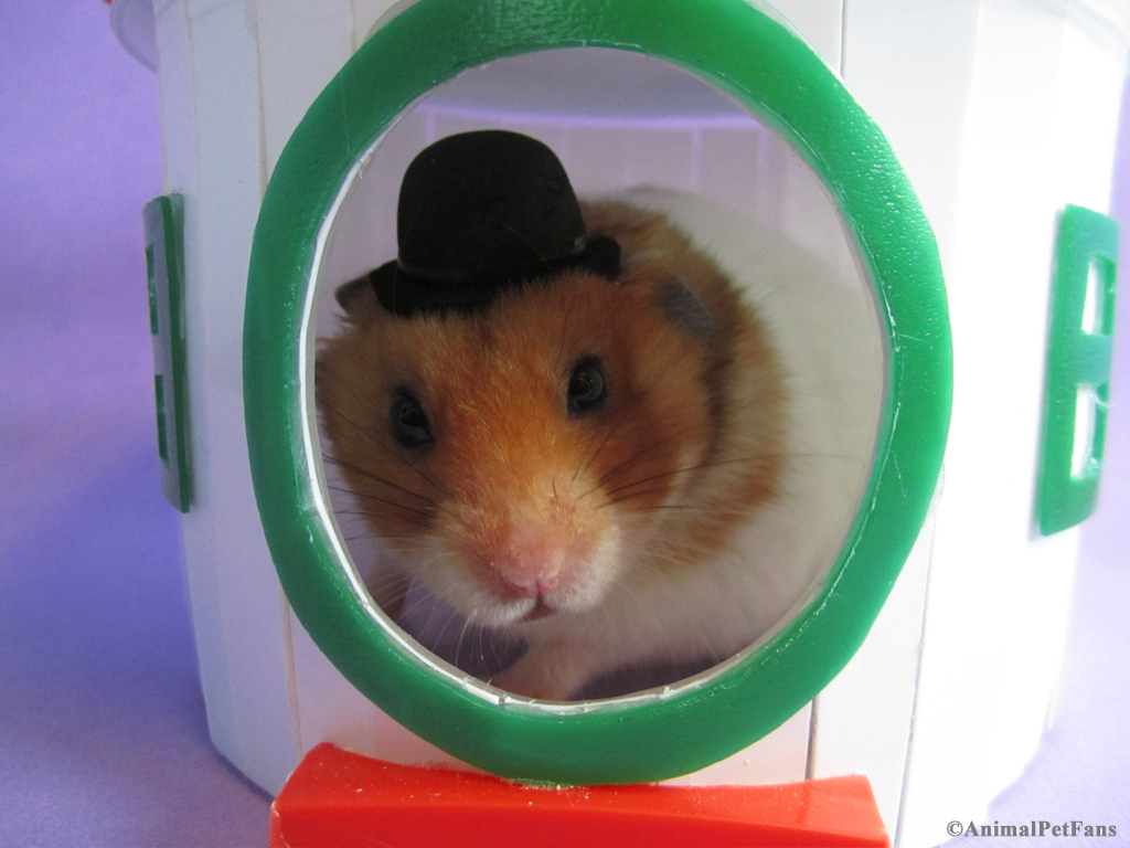 De.hamster.com