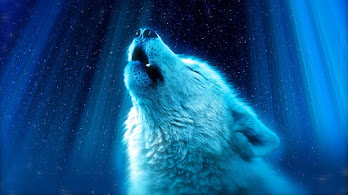 White Wolf, Howling, 8K, #4.572