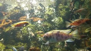حكايات عن حديقة الاسماك