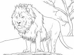Wild Lions Africa Coloring Sheet
