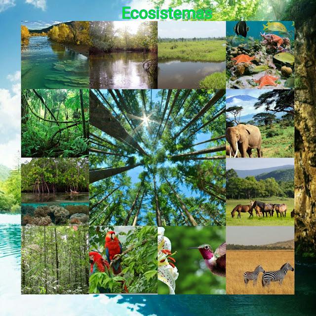 Ecosistema terrestre