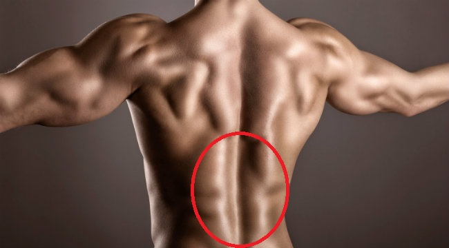 「背肌」的圖片搜尋結果