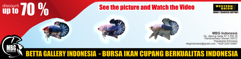 Maharani Betta Gallery Indonesia