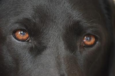 köpeklerin gözlerine bakmayın