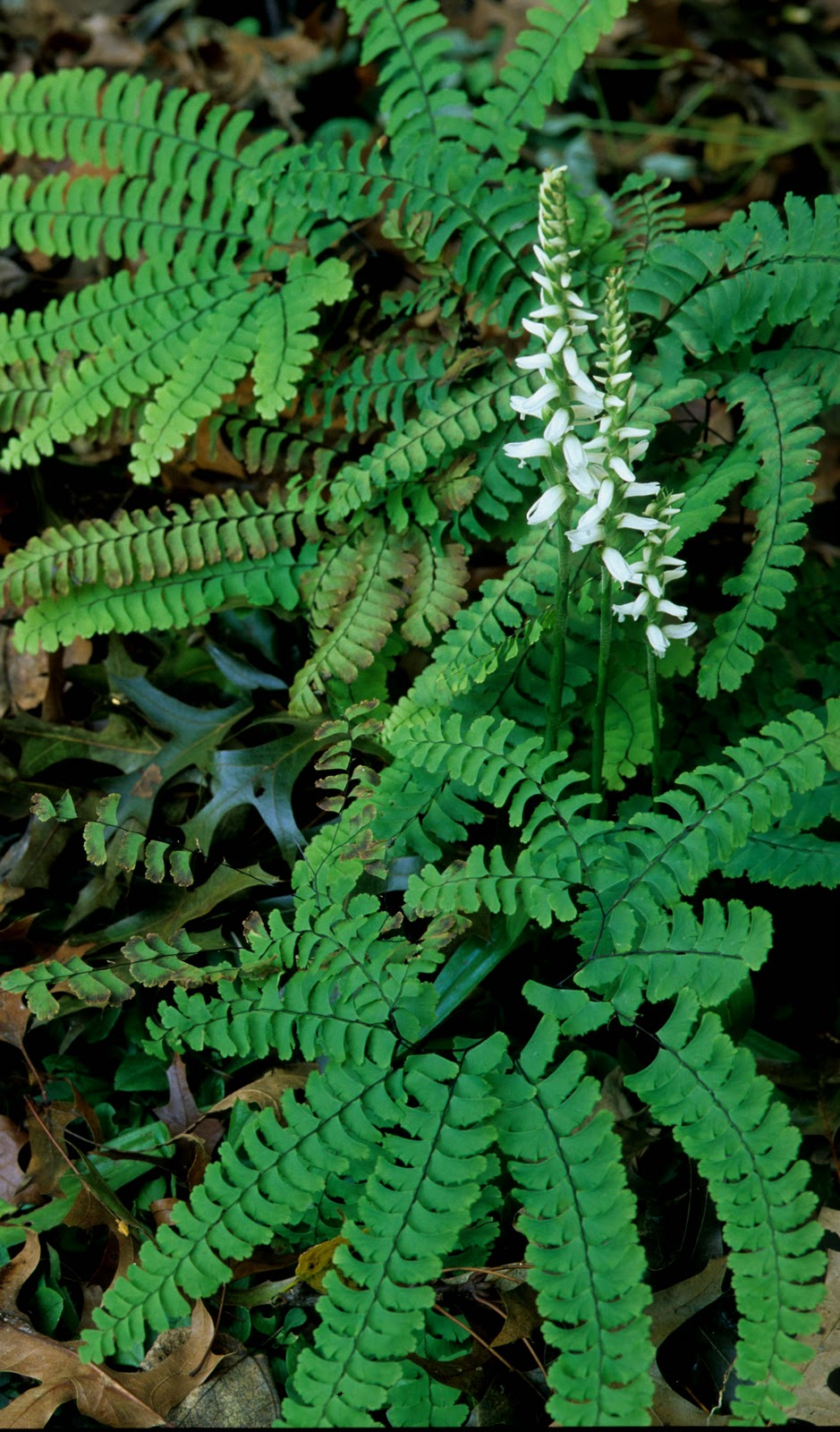 Kentucky Native Plant and Wildlife: October 2011