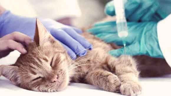 Protect cats from diseases