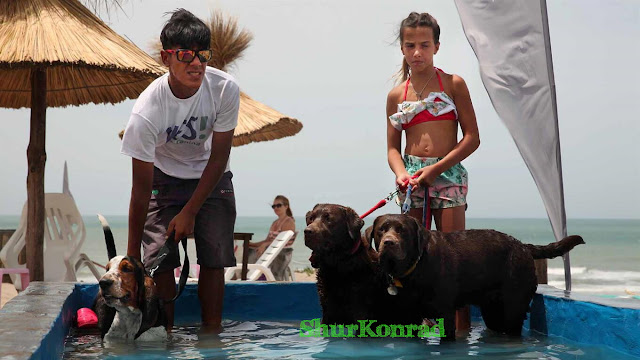 playas-perros- Argentina dog puppy cachorro pet beach ShurKonrad 5