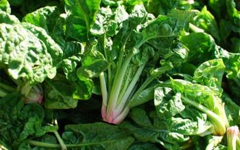 Foto de espinacas verdes