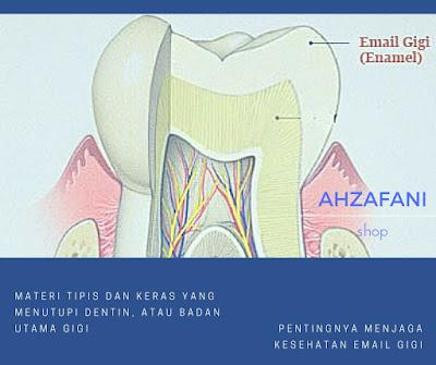 Email gigi merupakan materi tipis dan keras yang menutupi dentin, atau badan utama gigi