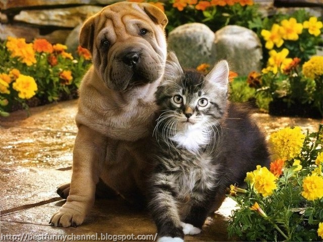 Sweet puppy and kitten.