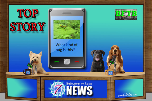BFTB NETWoof Dog News with cell phone story