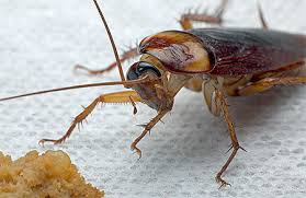 Amazing and Easy Home Tips to Destroy Cockroaches from Home