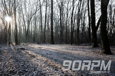 Parco del Lura in mtb: foto del bosco in dicembre.